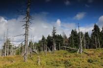 V Polsku les na mnoha místech odumřel