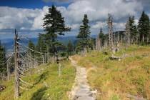 Krkonoše - Lesní hřeben, horská smrčina v rozpadu