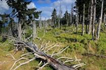 Les po imisích a kůrovci