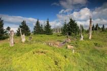 Krkonoše - Slezské sedlo, horská smrčina v rozpadu