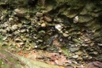 Jestřebí hory - Žaltman, žaltmanské arkózy  IMG_8263
