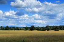 Krajina poblíž Úpy u Říkova
