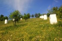 Křížová cesta v Gerniku