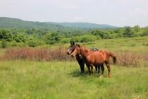 Pastviny nad Gernikem