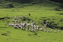 První setkání s pastevci...