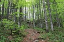 Výstup krásným lesem k další propasti Bortig