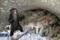 Medvědí jeskyně - dioráma s jeskynním medvědem, lvem a hyenou