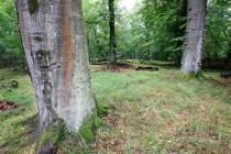 Živé i mrtvé dřevo