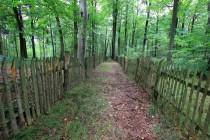 Uvnitř oplocenek les zmlazuje. Jinde všechno sežere zvěř.
