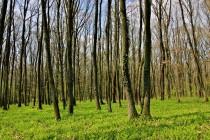 Různé podoby lesa. Les Svíb, odrůstajícící pařezina.