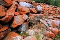 I když patří Trentepohlia do zelených řas, barvu má sytě oranžovou či červenou