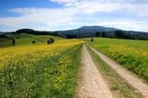 Cesta z Vysoké Srbské na Machov, v dálce Bor