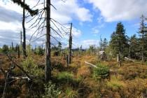 Zdejší les padl za oběť kůrovci. Asi to nepotrvá to dlouho a podobně dopadnou lesy i v Broumovských stěnách...