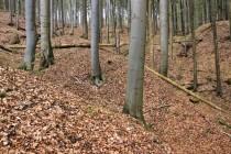 Bártův les nad Zlatým potokem. Reliéf zde byl povrchovým dobýváním zlata zcela přemodelován.