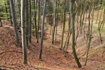 08c Sklenářovice - Bartův les, Velká pinka