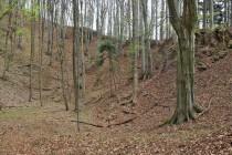 Sklenářovice - Bartův les, Velká pinka