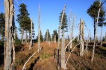 A mrtvý les