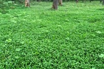 Zdejší les má místy bohaté bylinné patro, jinak je ale nezajímavý...