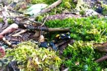 Zapršelo a vylezli salamandři (Xiaomi)