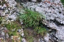 Skalky porůstá zajímavá vegetace, např. kapradina sleziník severní