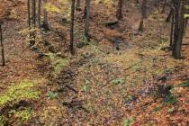 Biotop páskovce - lesní potůčky v náchodské Montaci