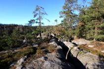 Reliktní bory na Skalním ostrově. Les, který zapomněl vyhynout. Tyto bory tu přežívají z dob konce posledního glaciálu...