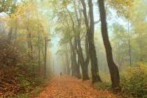 Javorové stromořadí podél cesty k náchodskému zámku