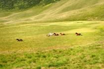 Na pastvinách ve valašských horách...