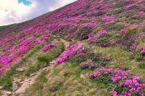 Stezka na vrchol Rosu